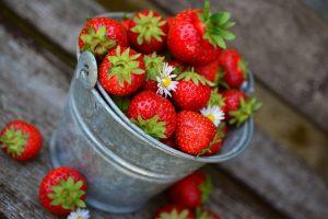 Agricool, des fraises cultivées à Paris